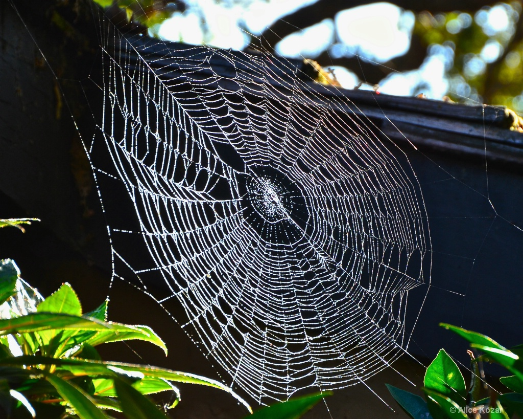 Pearly Spider Web