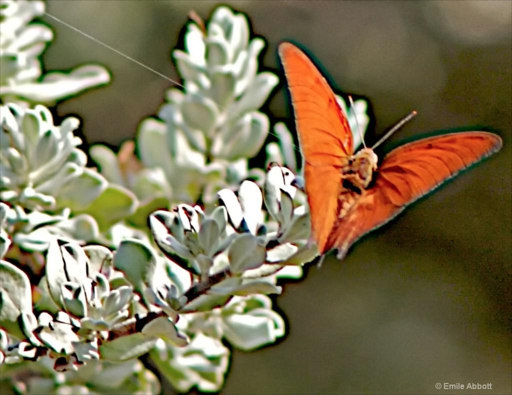 The color orange