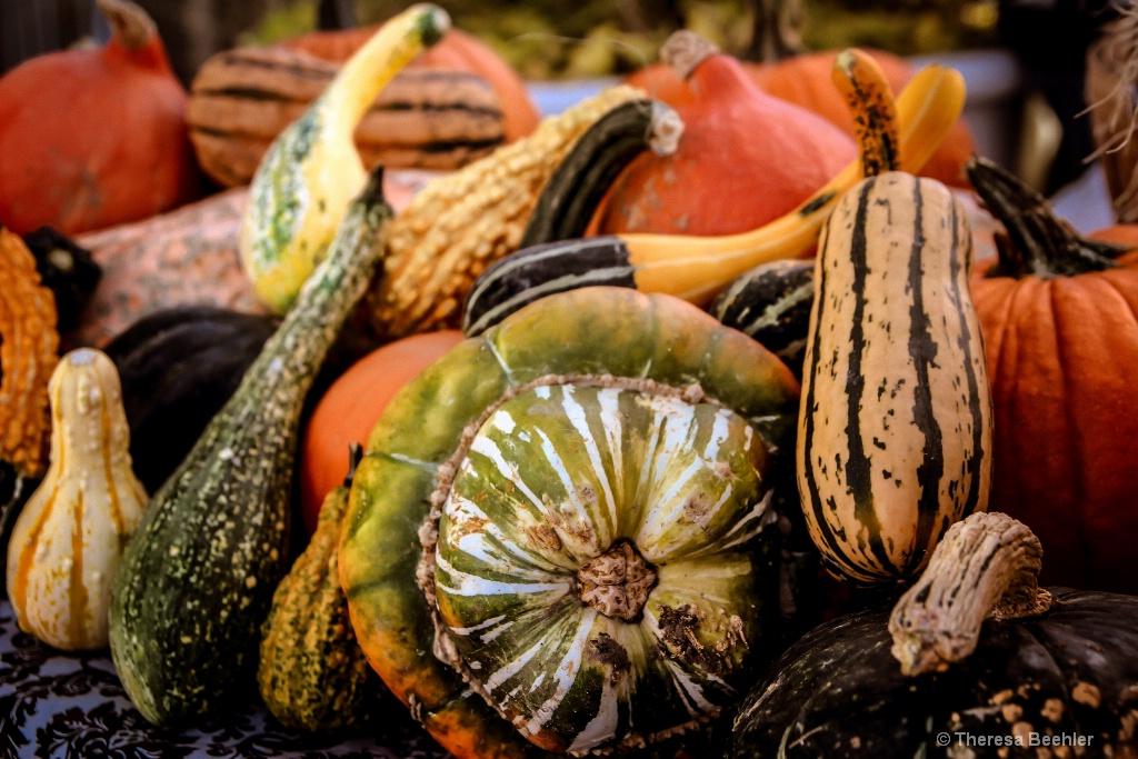 Pumpkins - Fall Bounty 2