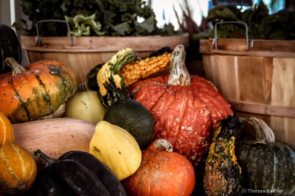 Pumpkins - Fall Bounty 5