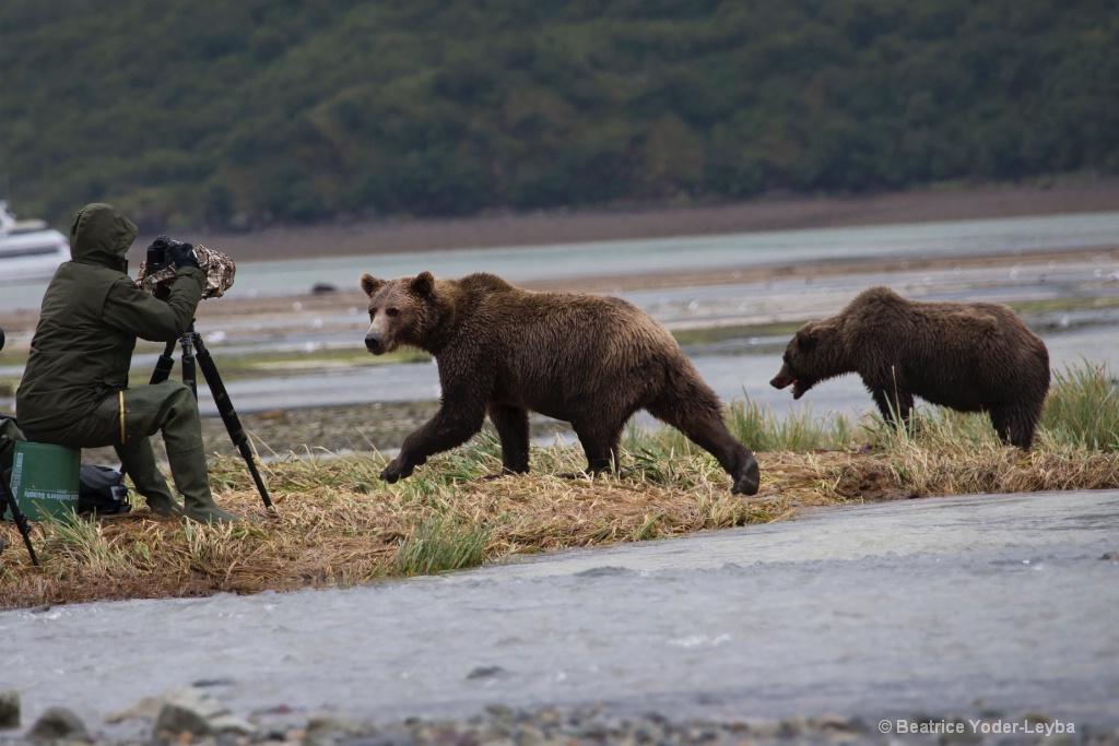 Bears and Photographers