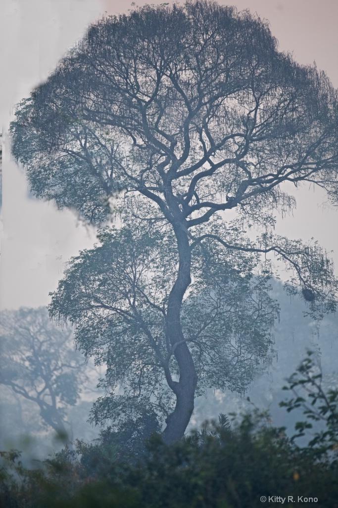 Tree in Pantanal