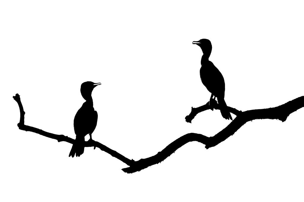 Cormorants in Silhouette