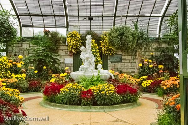Niagara Falls Chrysanthemum Festival - I