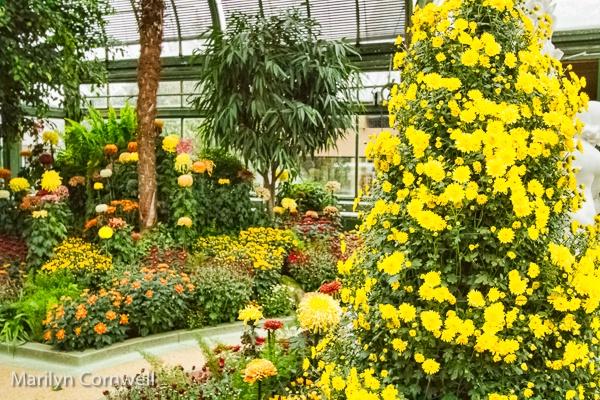 Niagara Falls Chrysanthemum Festival - II