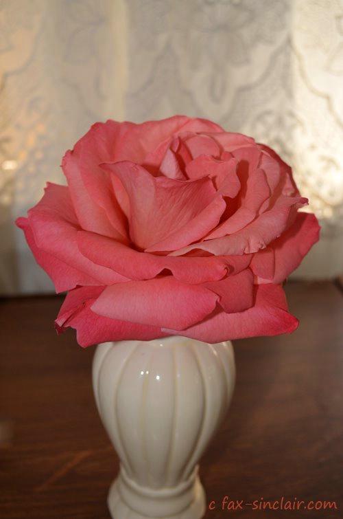 December Rose Full