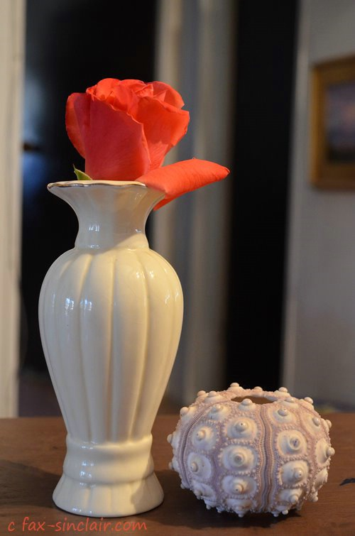 December Rose with UFO Shell