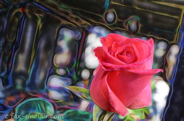 December Rose FX 1
