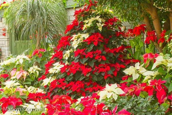 A Special Christmas Tree