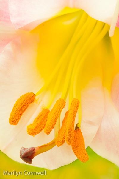 Pollinator's Heaven