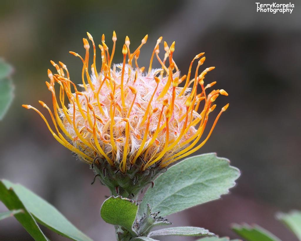Kula Botanical Garden, Maui
