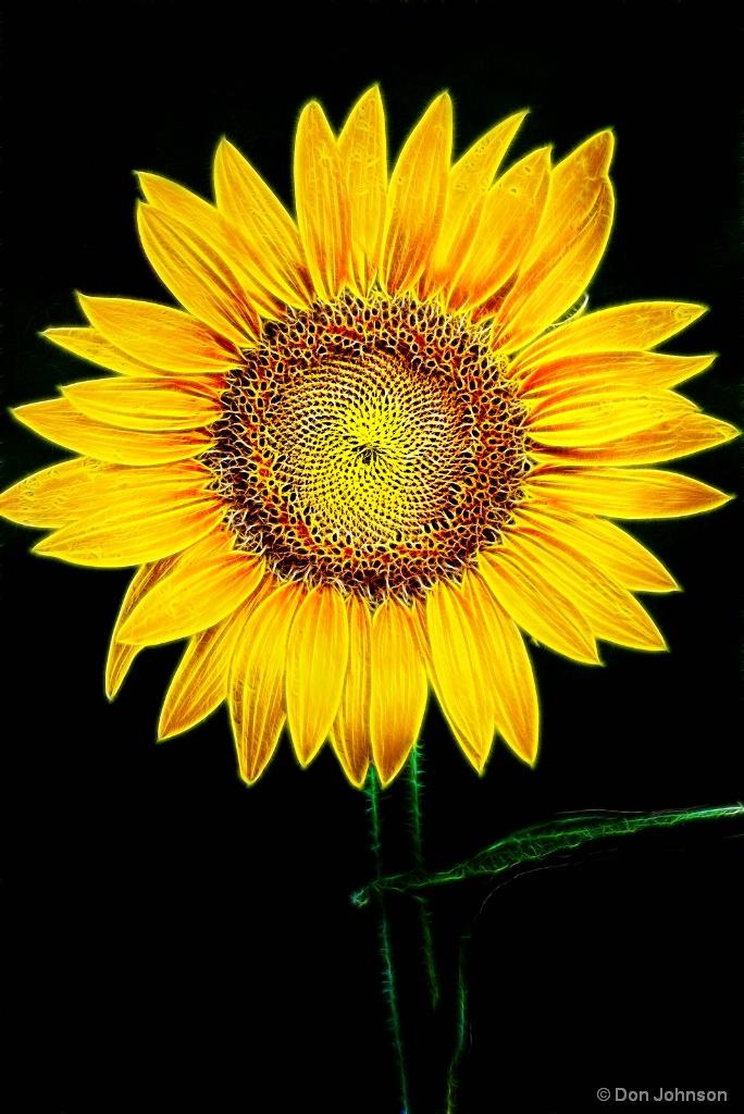 Perfect Sunflower-Fractalius 7-22-17 108