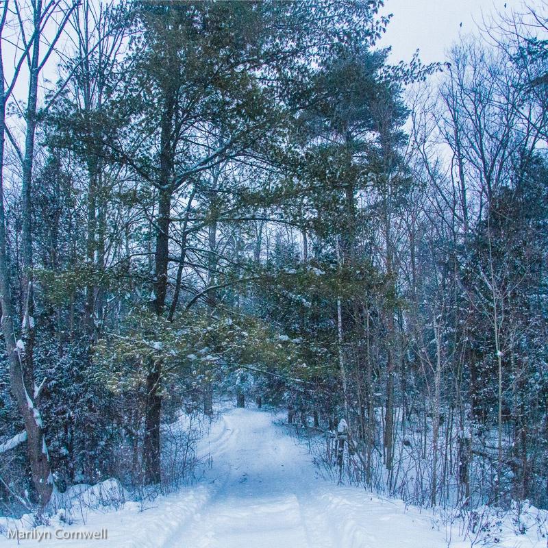 Christmas Day - Niagara Escarpment