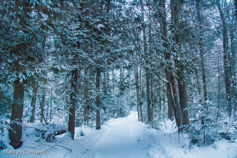 Christmas Day - Forest Trail