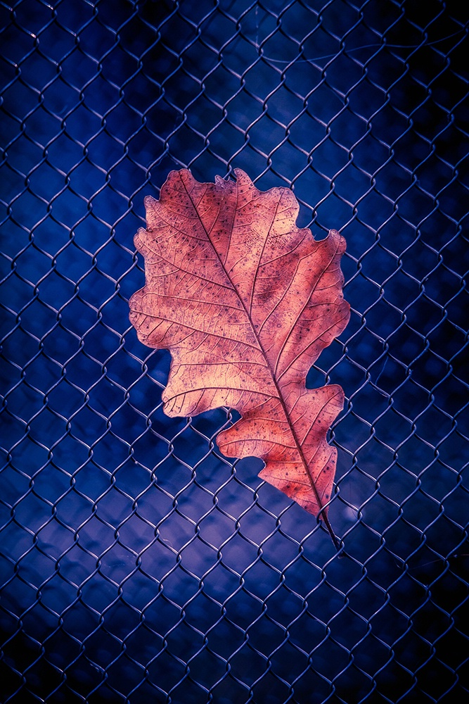 Remanent of Autumn