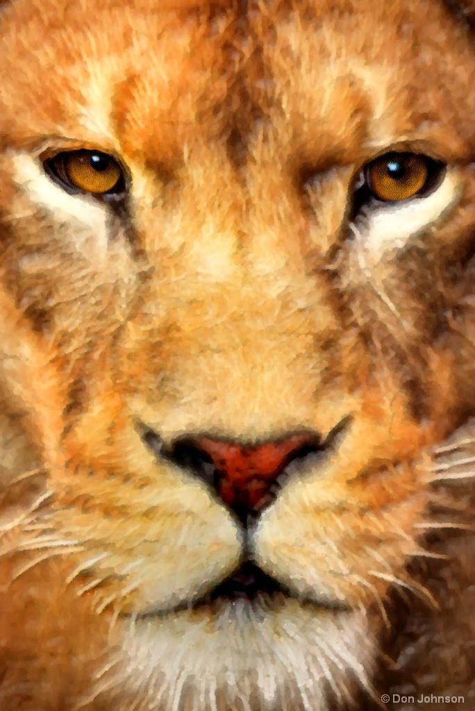 Female Lion Stare-Artistic 9-16-17 619