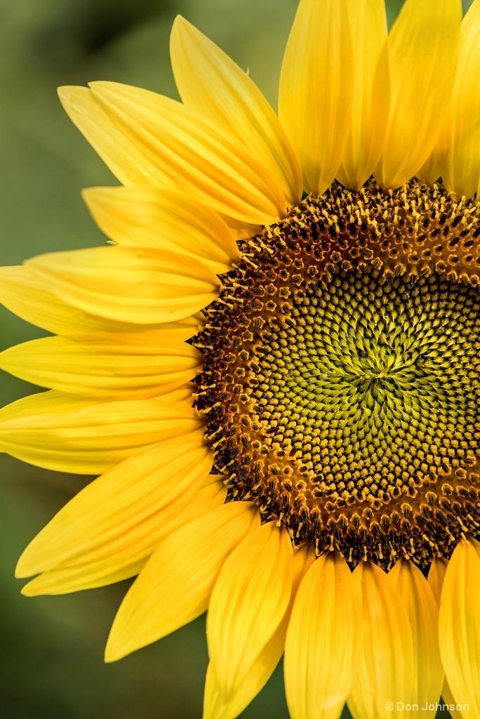 Part of a Sunflower 7-22-17 048
