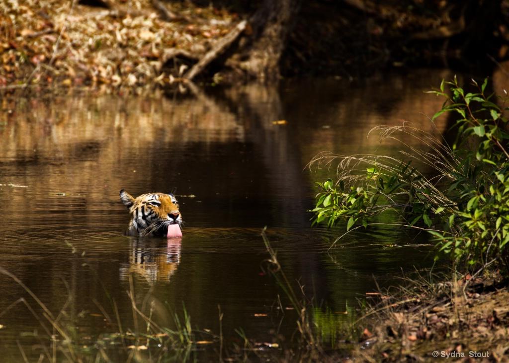 spotty in river