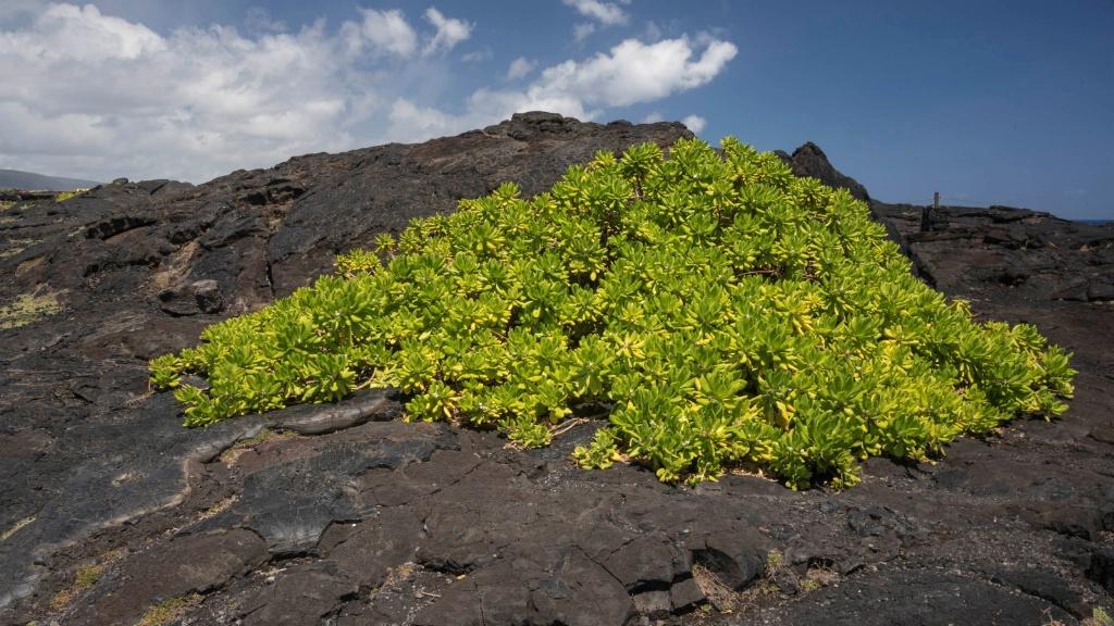 Growth on Volcano Land
