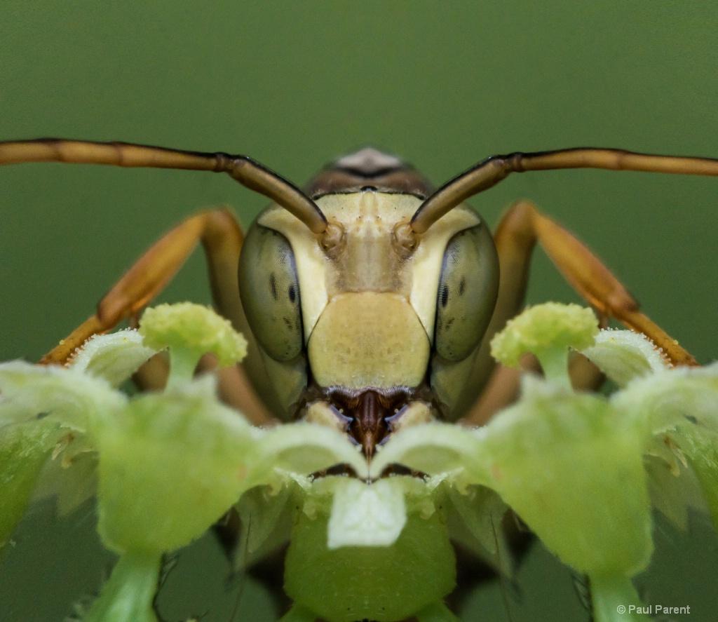A Strange Bug