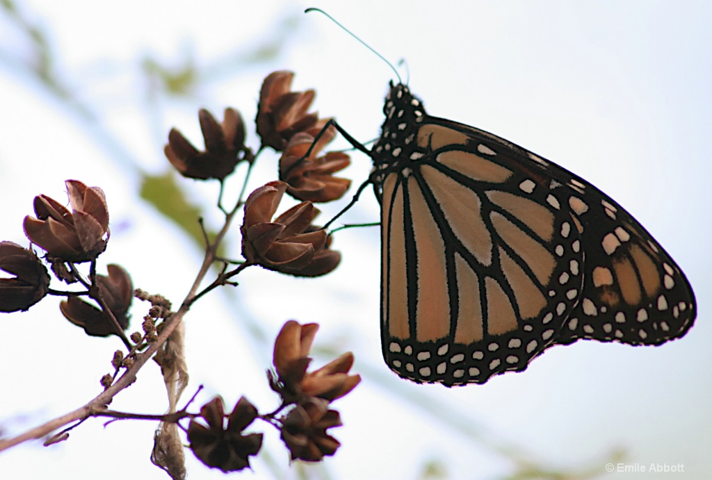 Almost Monarch time