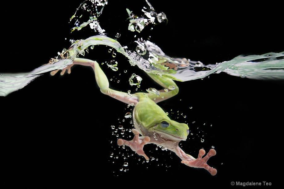 Macro - Frog in Water