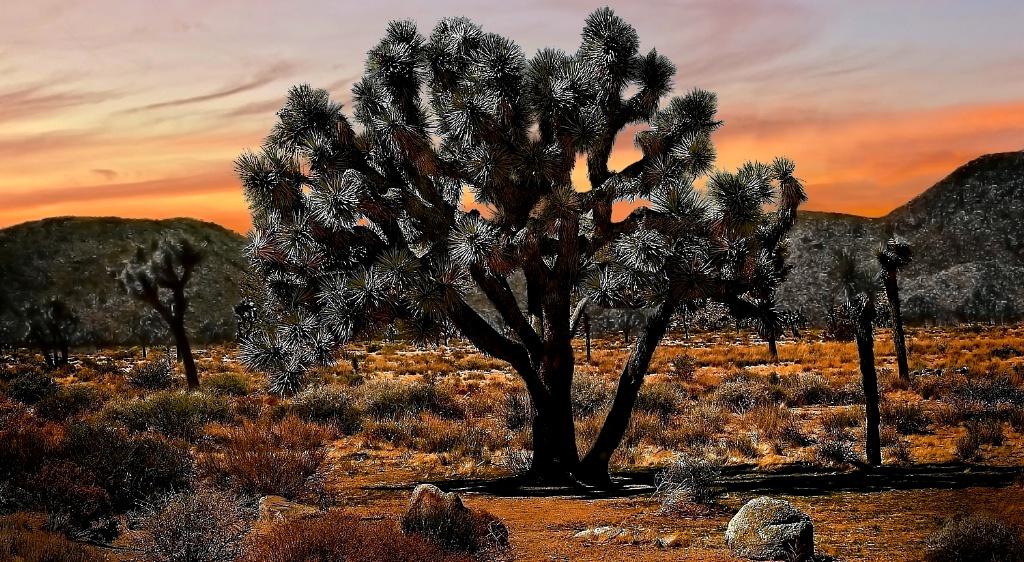 The Jashua Tree