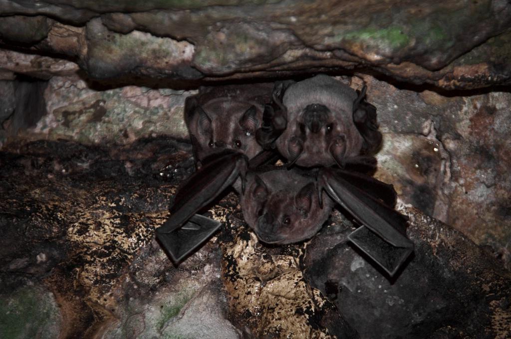 Bats in Yaxchilan Chiapas