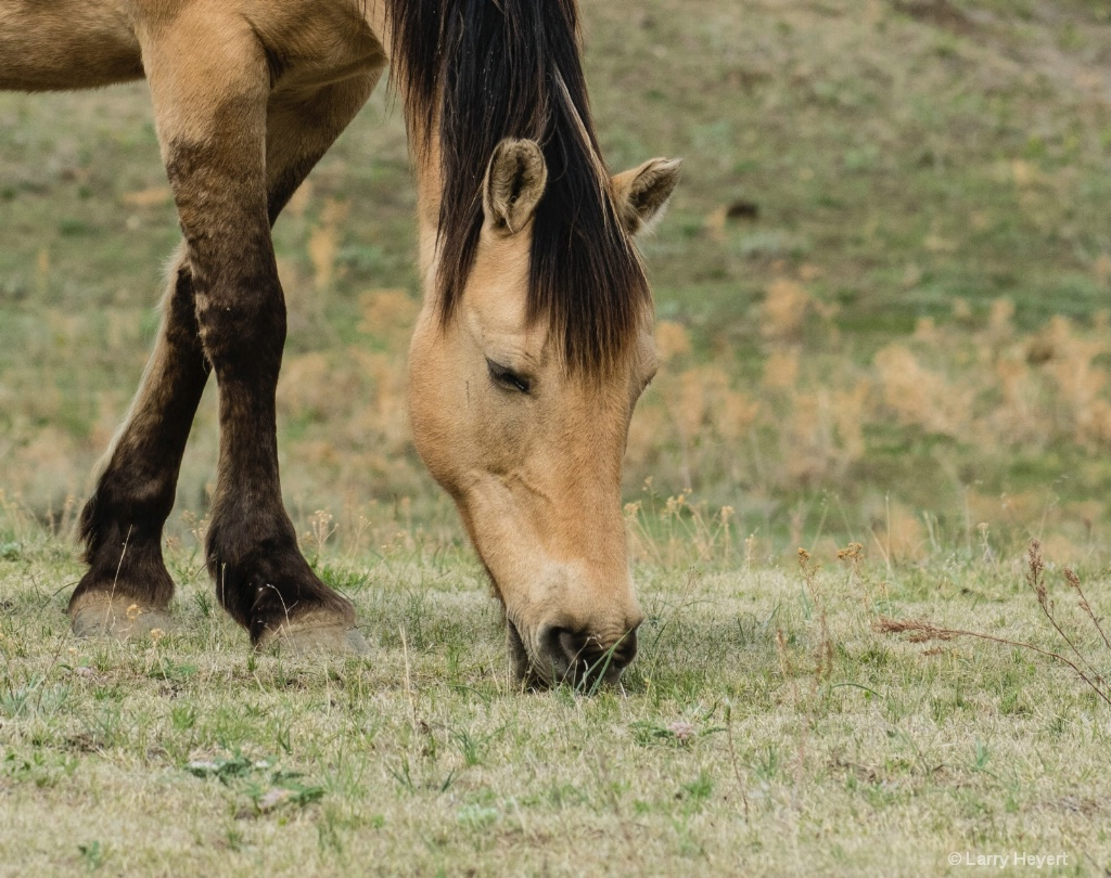 Black Hills Horse Sanctuary