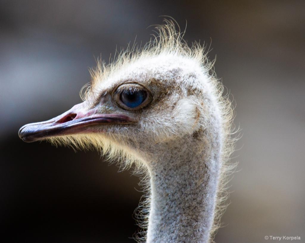 You gotta love an Ostrich!