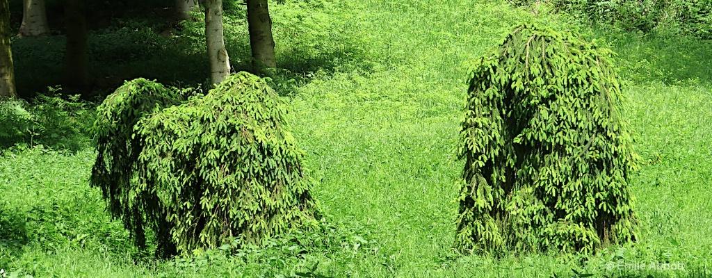Unique trees Black Forest