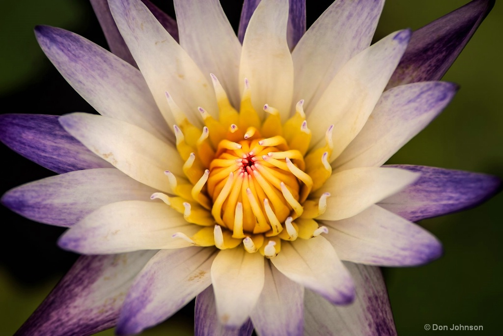 Multi-Colored Lily 3-0 F LR 6-13-18 J176