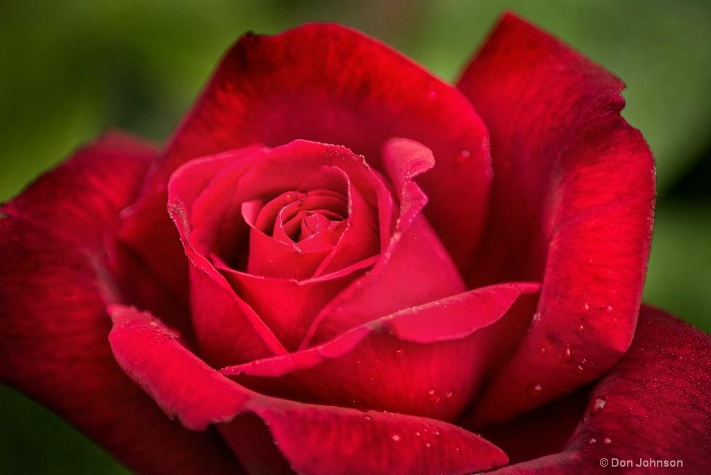 Red Rose-BSG 3-0 F LR 6-10-18 J412
