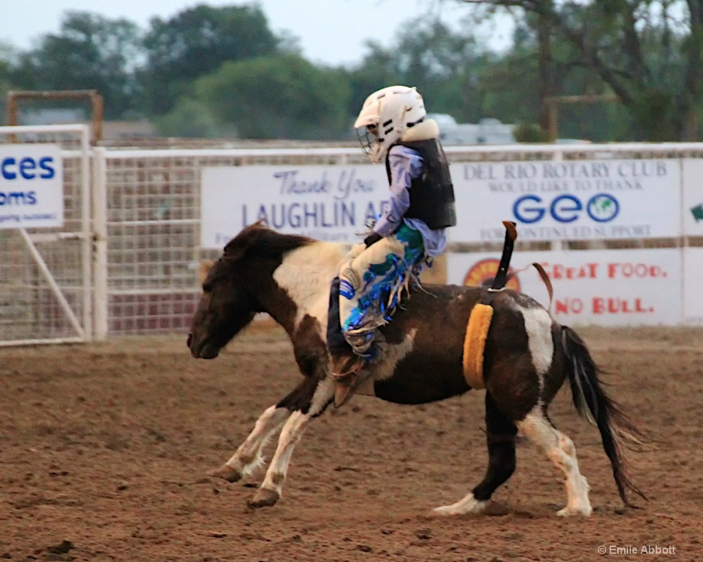 Youngest Bronc Rider