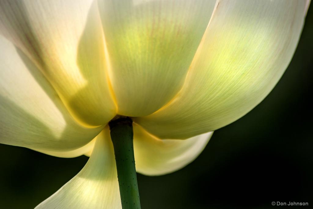 Bottom of Lotus 7-7-17 597