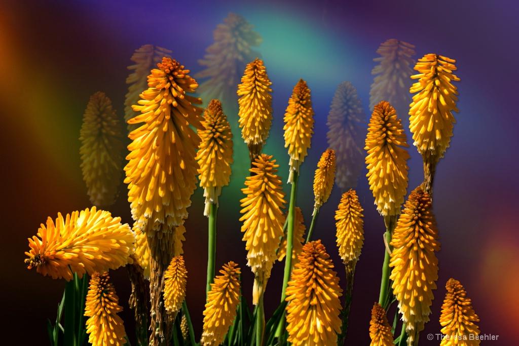 Blooming Torch / Echo Mango Blooms