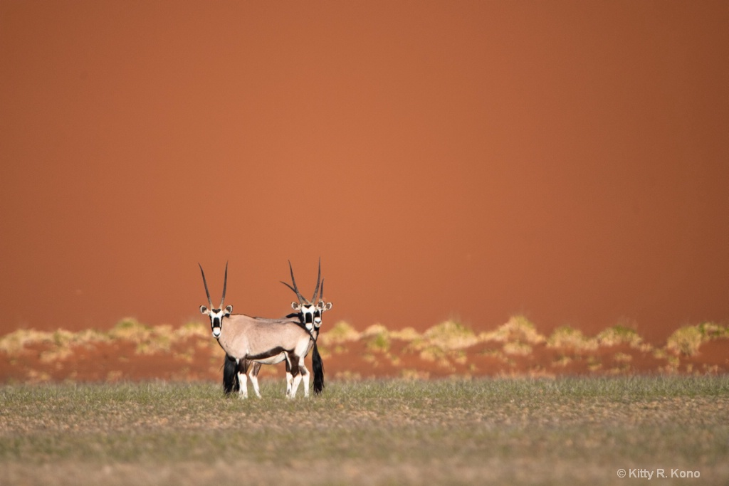 Three Oryx Against the Red Sand Dune