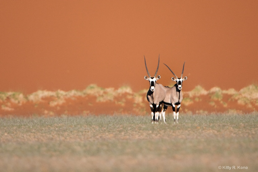 Two Oryx and the Sand Dune