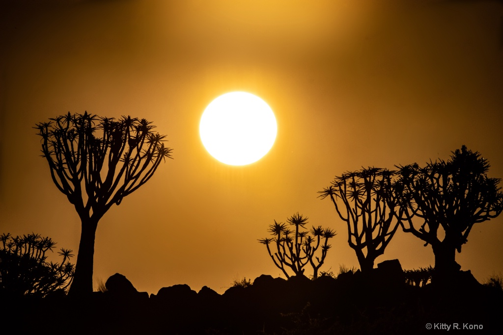 Sunset Over the Quiver Tree Forest