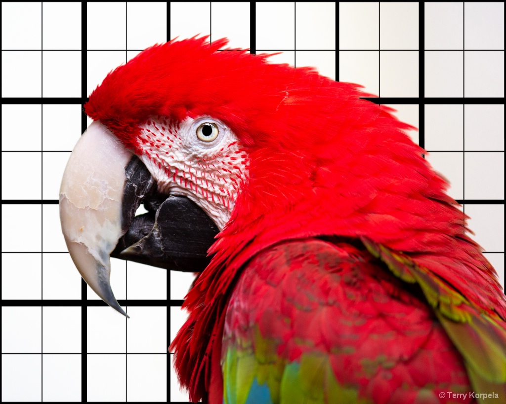 Green-winged Macaw