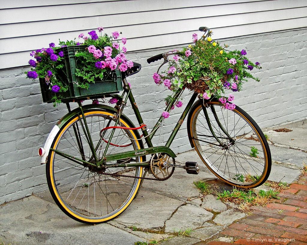 Nantucket Bike