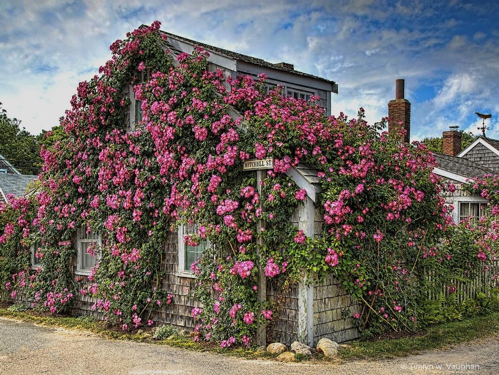 Sconset - Leslies Roses