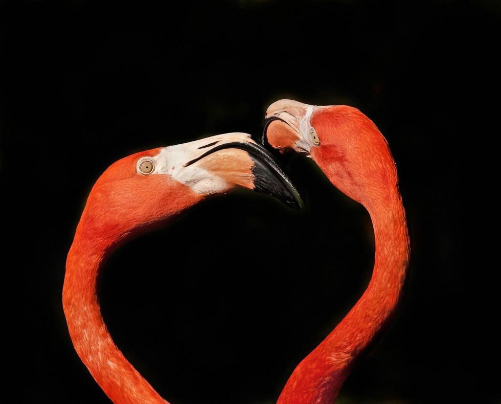 Flamingo conversation