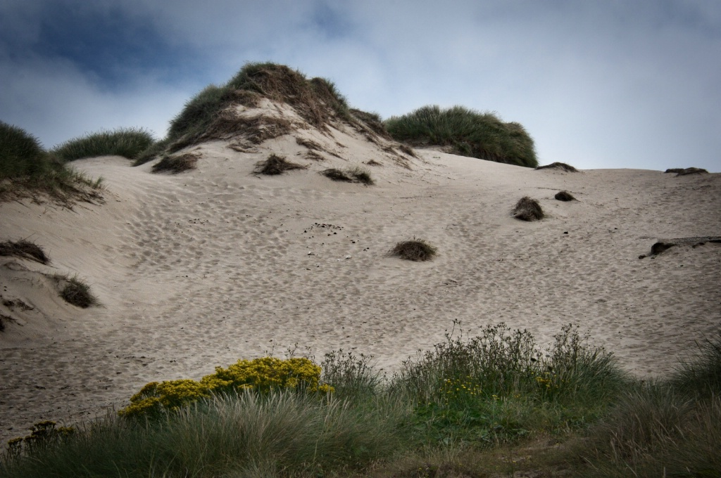Sand Dunes in Cornwall