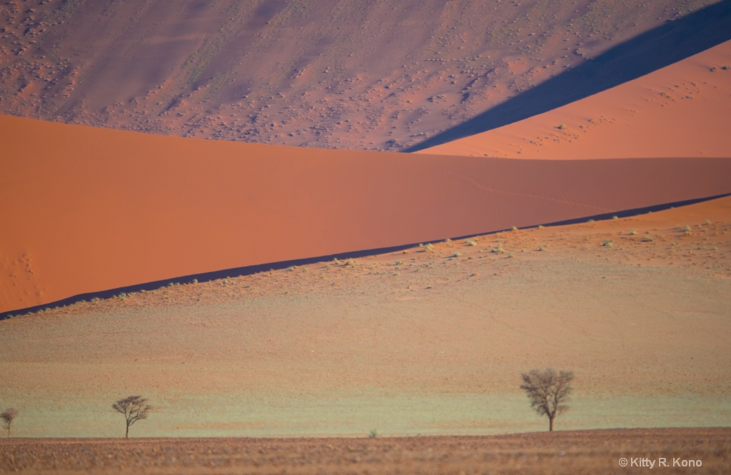 Sand Dune Lines