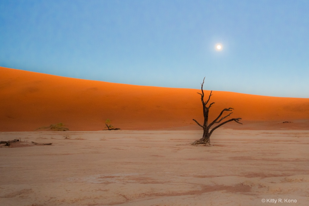 Dead Vlei with Moon Wide Angle
