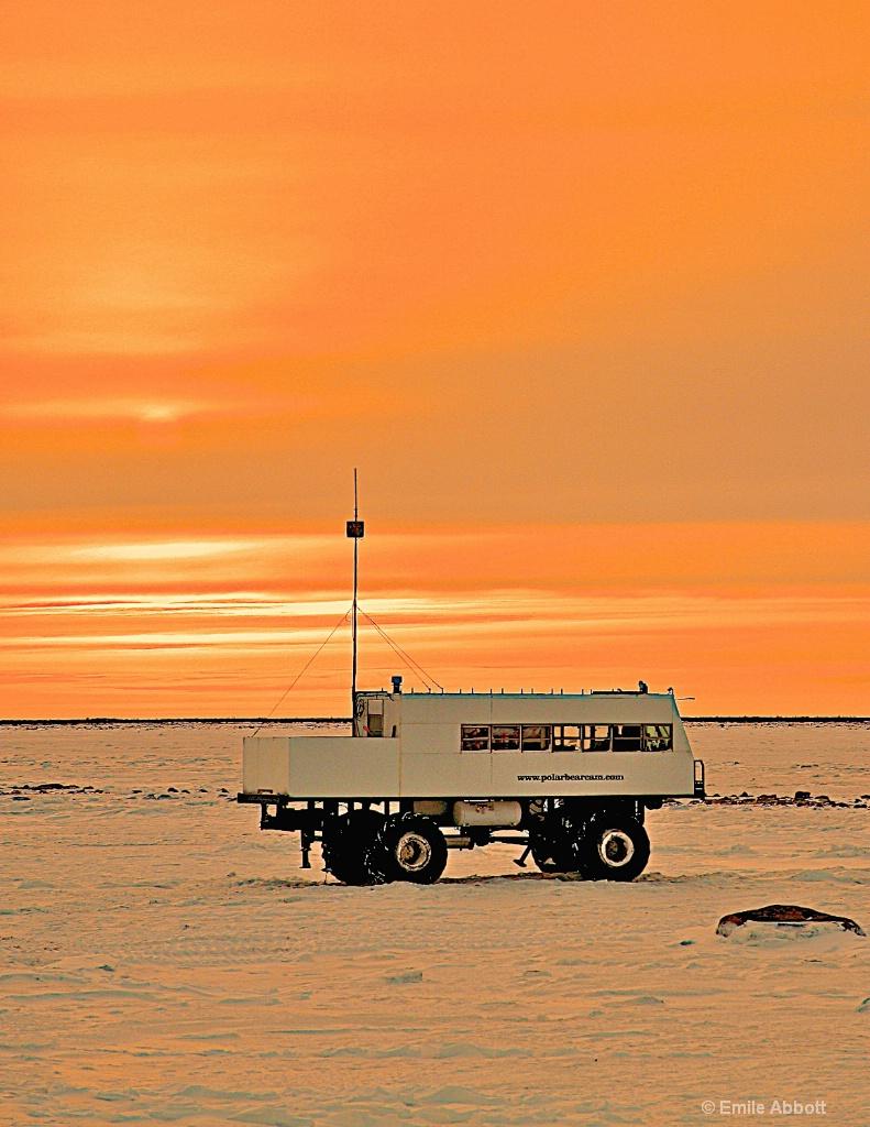 PolarBearCam at Sunrise