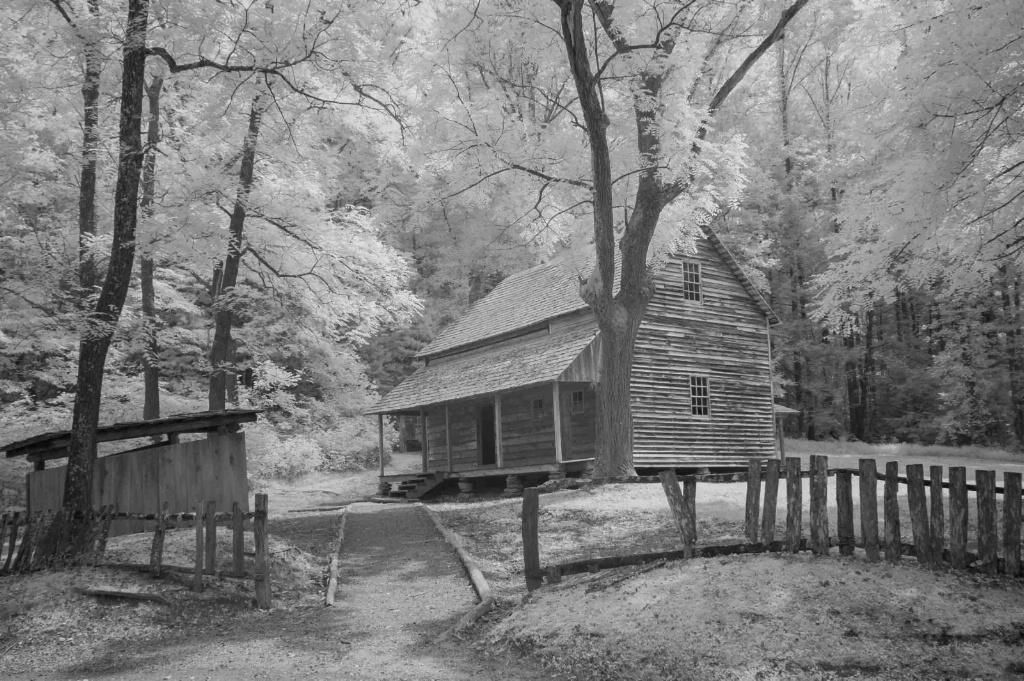 Cabin in the Cove