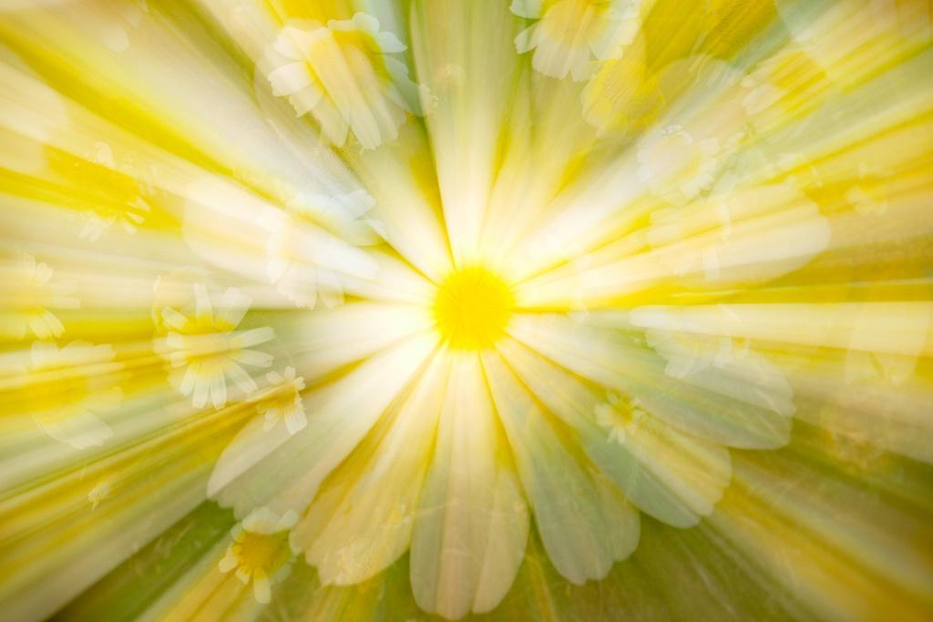 Daisy explosion.