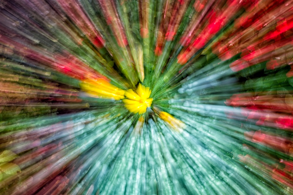 Floral Explosion  1817